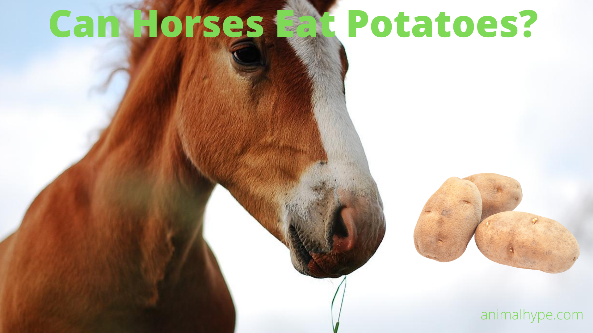 Can Horses Eat Potatoes