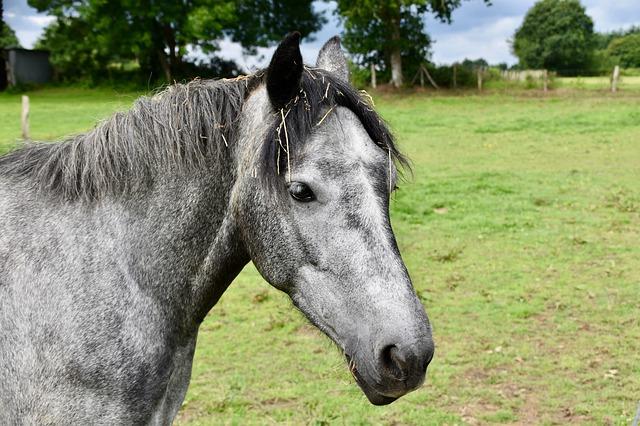 Famous Grey Horse Names