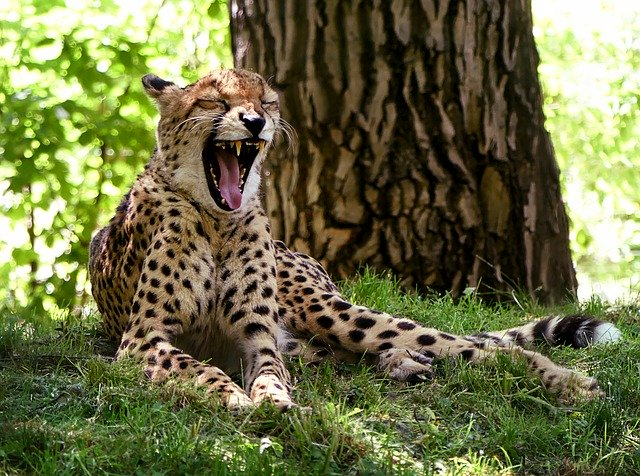 Female Cheetah Names