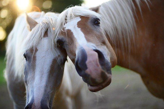 Funny Female Horse Names