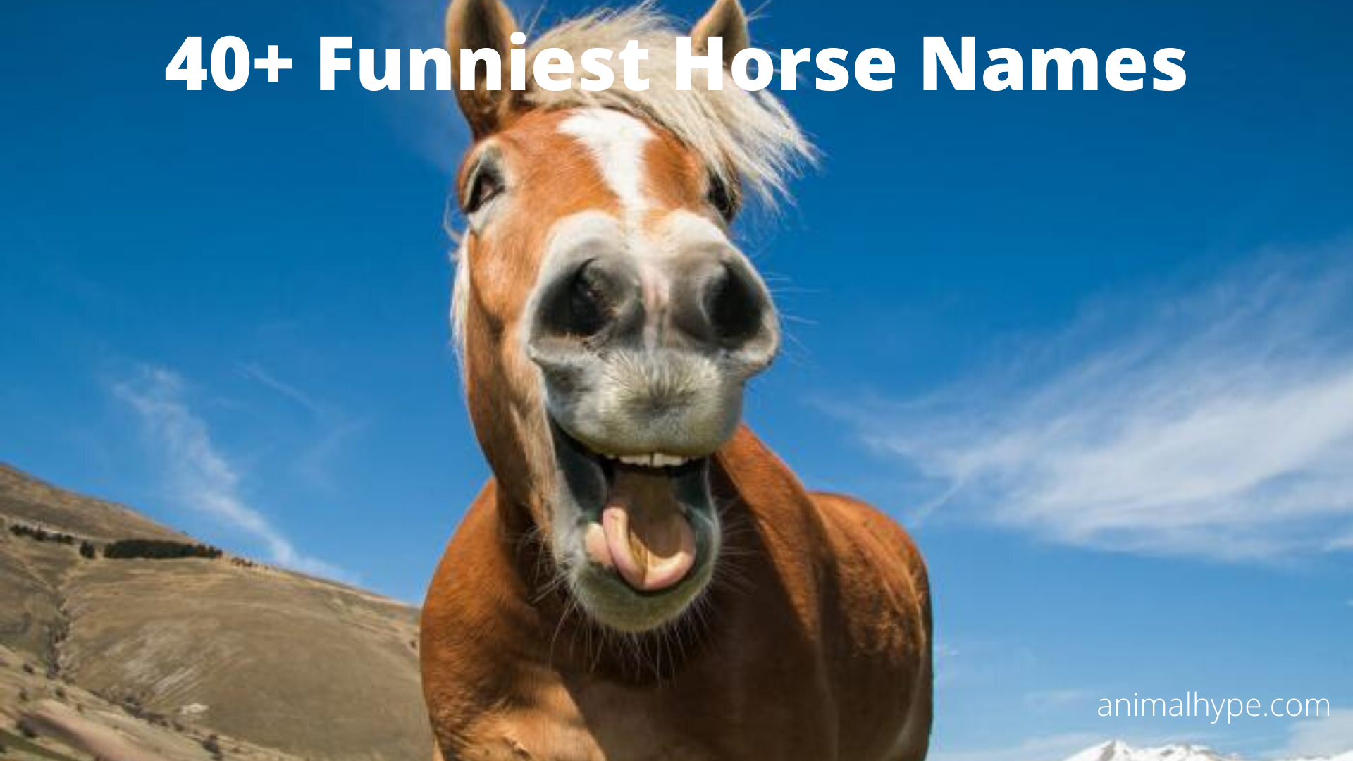 Funny Horse Names