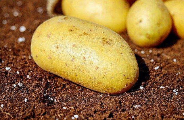 Health benefits of potatoes to goats