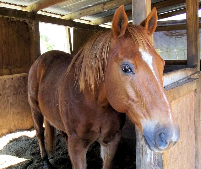 Male Brown Horse Names