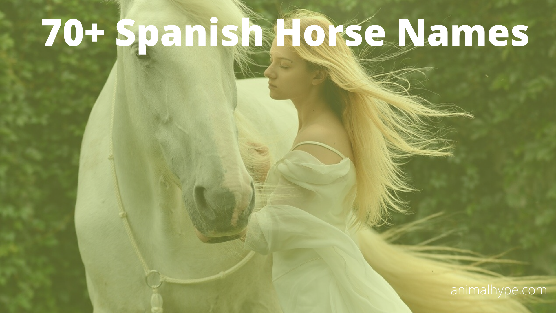 70 Spanish Horse Names With Meanings Animal Hype