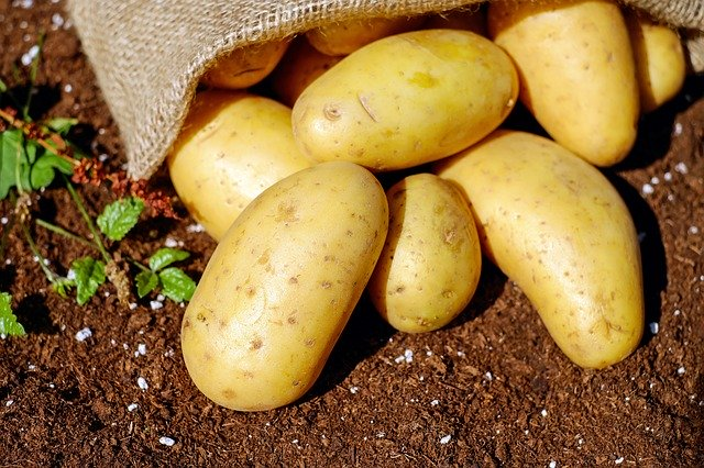 Why are potatoes harmful to horses