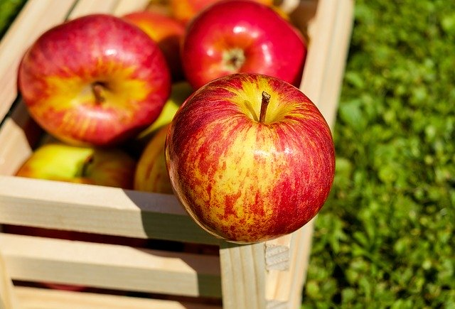 Are apples healthy for hedgehogs