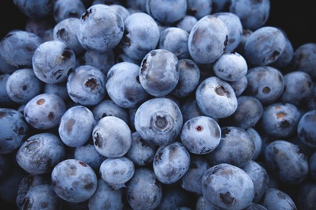 Benefits of feeding blueberries to chickens
