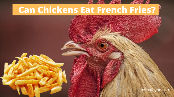 Can Chickens Eat French Fries