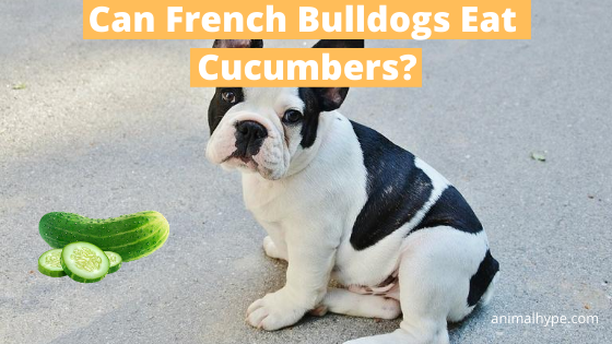Can French Bulldogs Eat Cucumbers