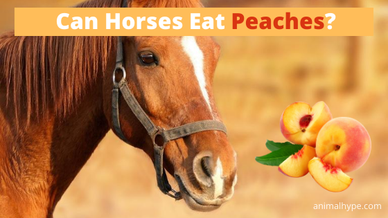 Can Horses Eat Peaches