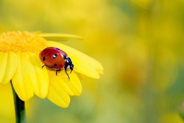 Cute Ladybug Names