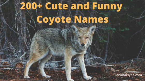 Coyote Names