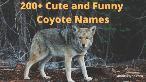 Coyote Names