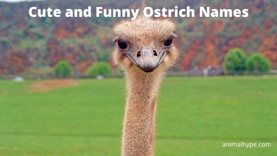 Cute and Funny Ostrich Names