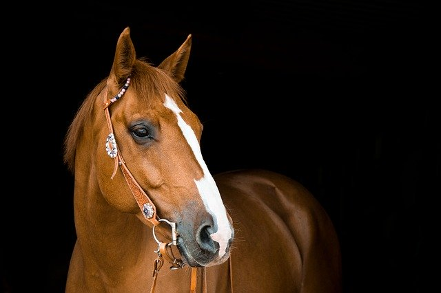 Do Horse Eat Peaches
