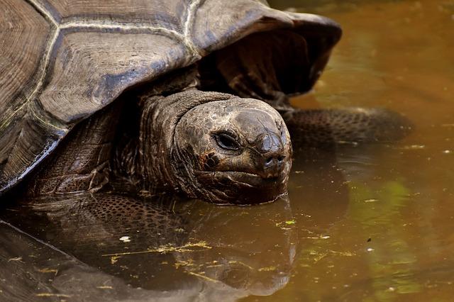 Do tortoise eat cucumbers