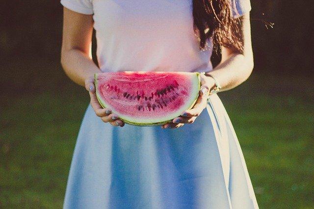 Feeding watermelon to Golden Retrievers