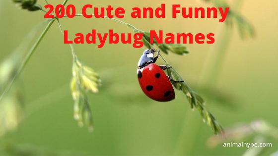 Ladybug Names