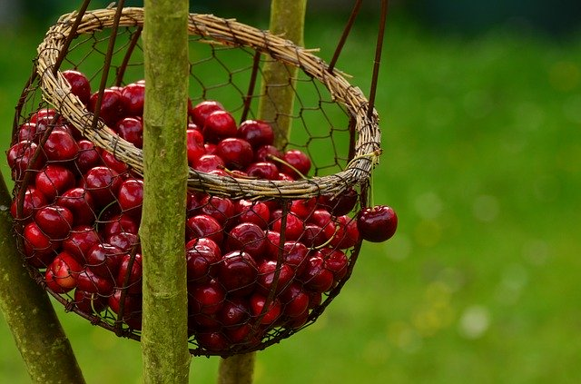 Are cherries healthy for chickens