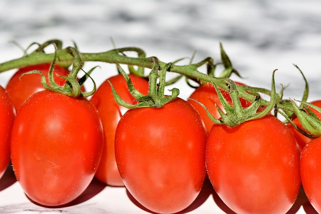 Are tomatoes healthy for chickens