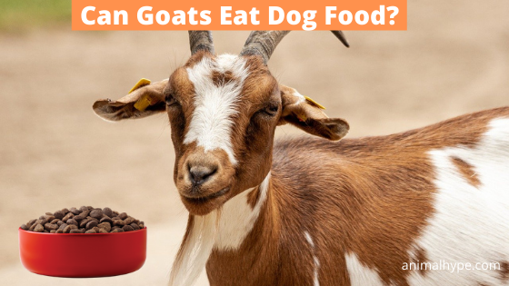Can Goats Eat Dog Food