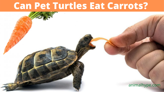 Can Turtles Eat Carrots