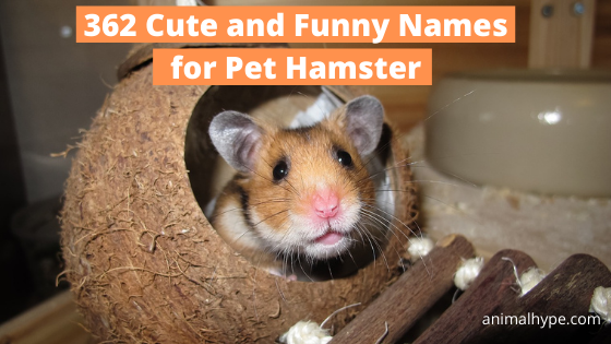 Cute and Funny Pet Hamster Names