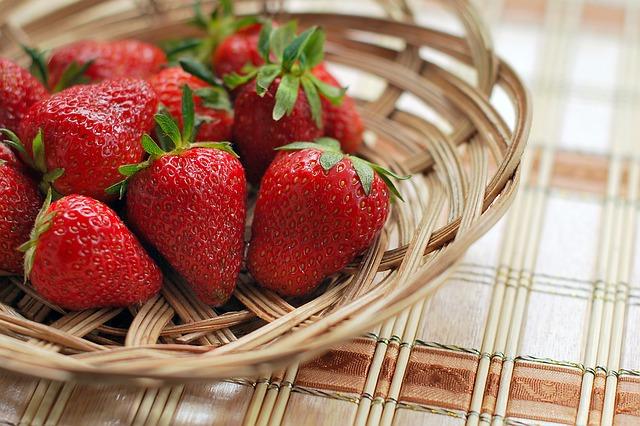 Do Boston Terriers like eating strawberries
