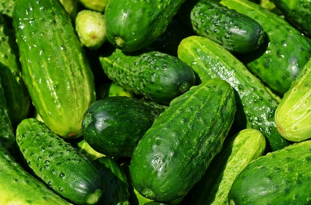Do Goats Eat Cucumbers