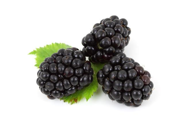 Do chickens eat blackberries