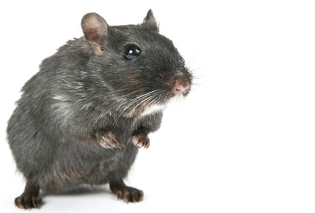 Grey Hamster Names