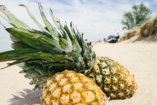 Nutritional benefits of pineapples for cows
