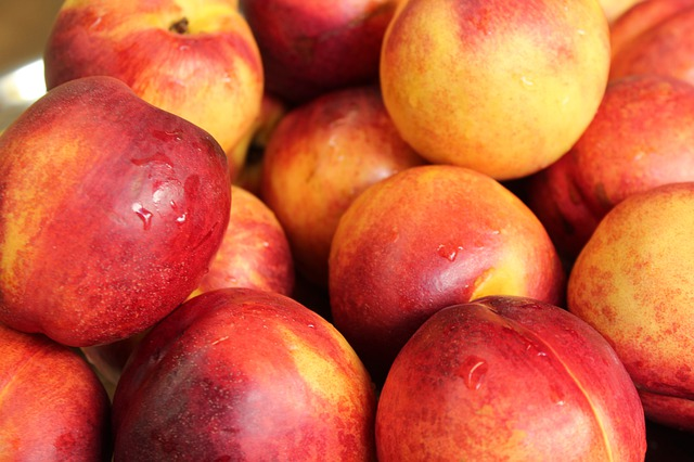 Risks involved in feeding nectarines to chickens