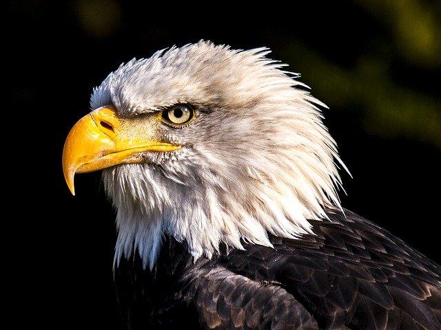 Cool Eagle Names