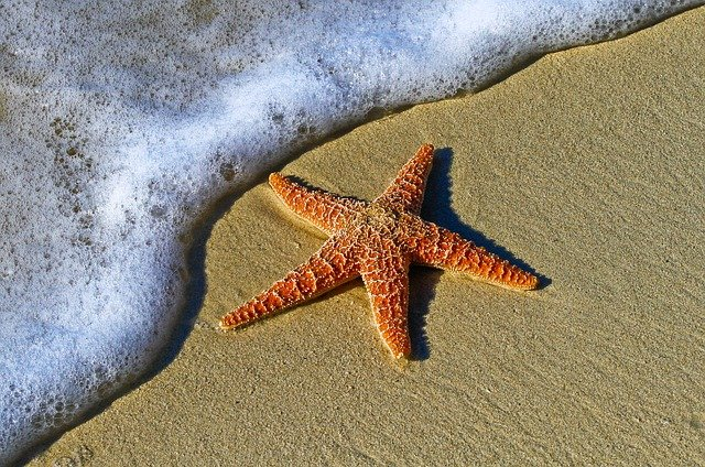 Cute And Adorable Starfish Names