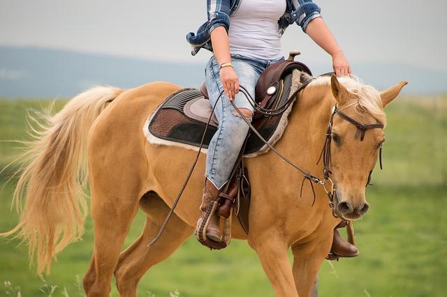 Cute and Funny Palomino Horse Names