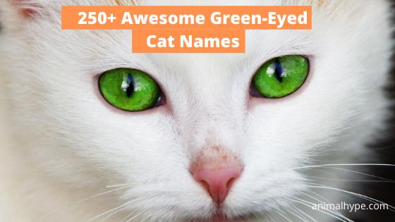 Green-Eyed Cat Names