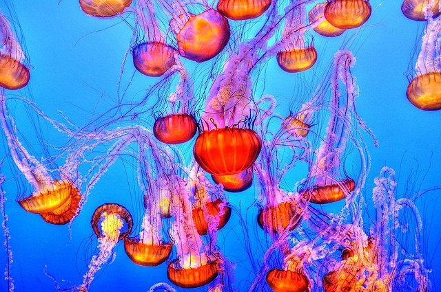Jellyfish Names Based On Disney Characters