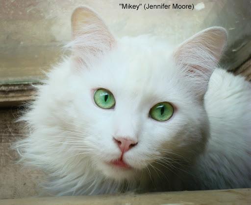 White Green-Eyed Cat Names
