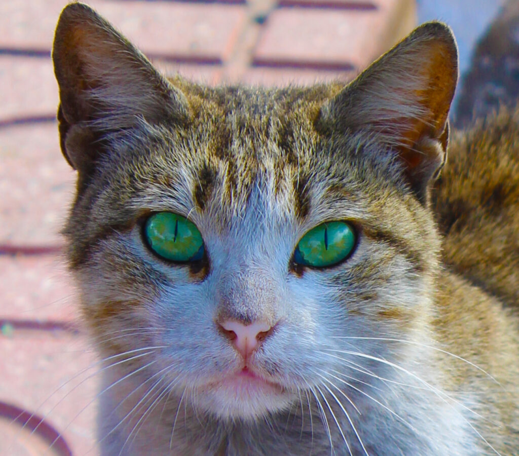 Names for pet cats with green eyes