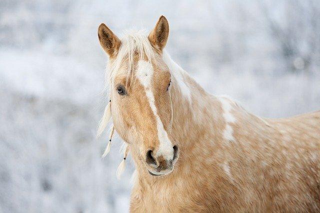 Palomino Stallion Names