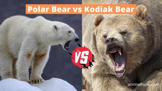 Polar Bear vs Kodiak Bear