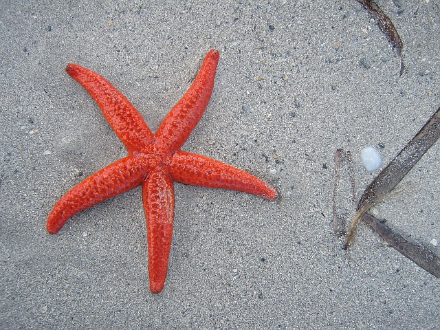 Starfish Names From Real Stars