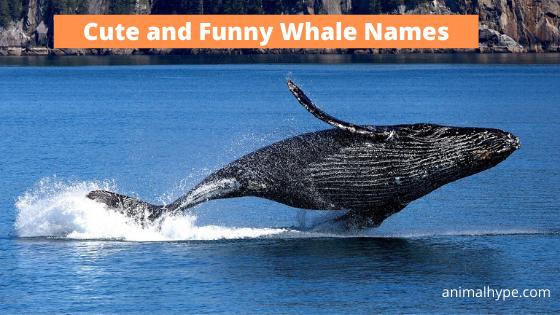Whale names