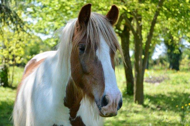 Beautiful Irish Horse Names