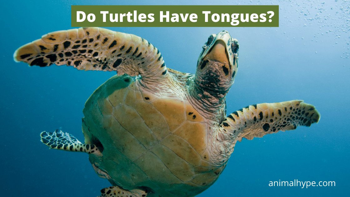 Do Turtles Have Tongues