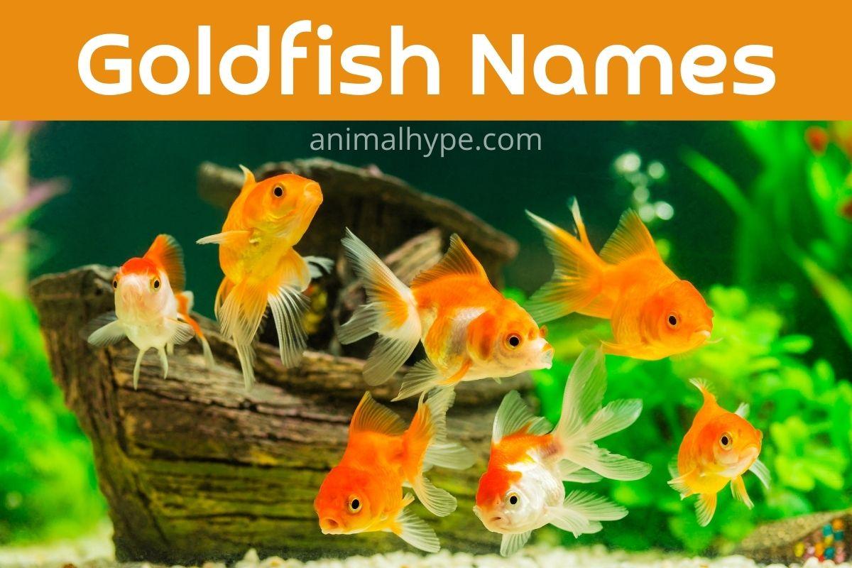 Goldfish Names