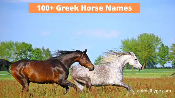 Greek Horse Names