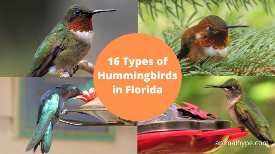 Hummingbirds in Florida