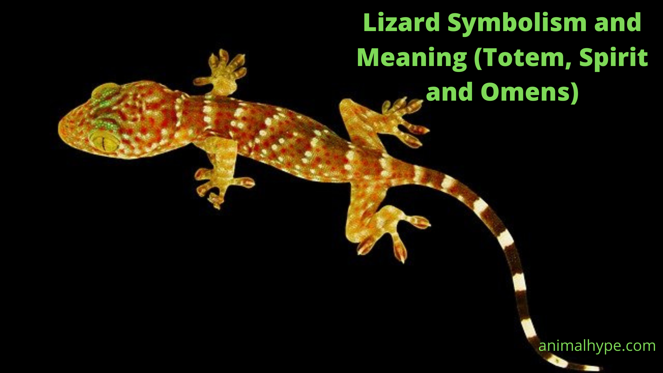 Lizard Symbolism And Meaning (Totem, Spirit and Omens)